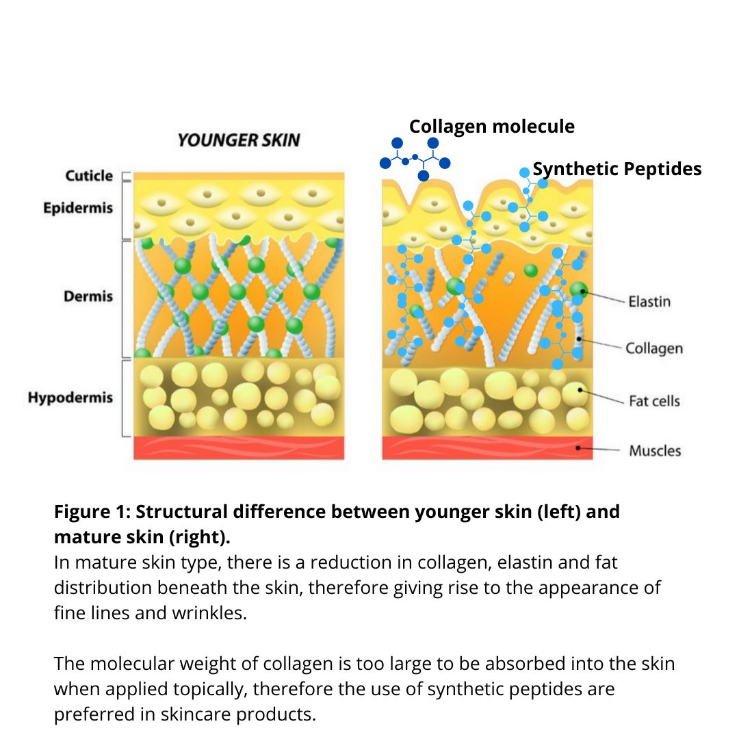The Benefits of Collagen Cream for Skin