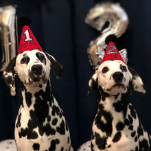 Load image into Gallery viewer, Dalmatians wearing Red Party Hats