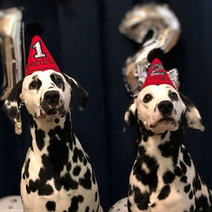 Dalmatians wearing Red Party Hats