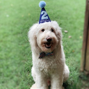 White dog with Royal Blue Party Hat and Bow Tie