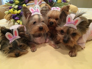 Bunny Ears Dog Hair Bow - (6 color options)