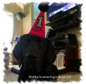 Medium black dog wearing red party hat