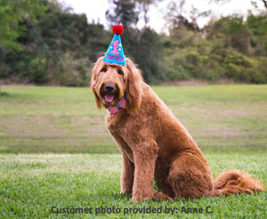 Large dog with blue party hat and red pompom