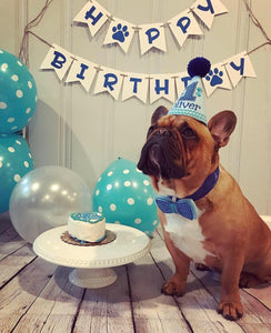 French Bulldog with Light Blue Pet Party Hat and Bow Tie