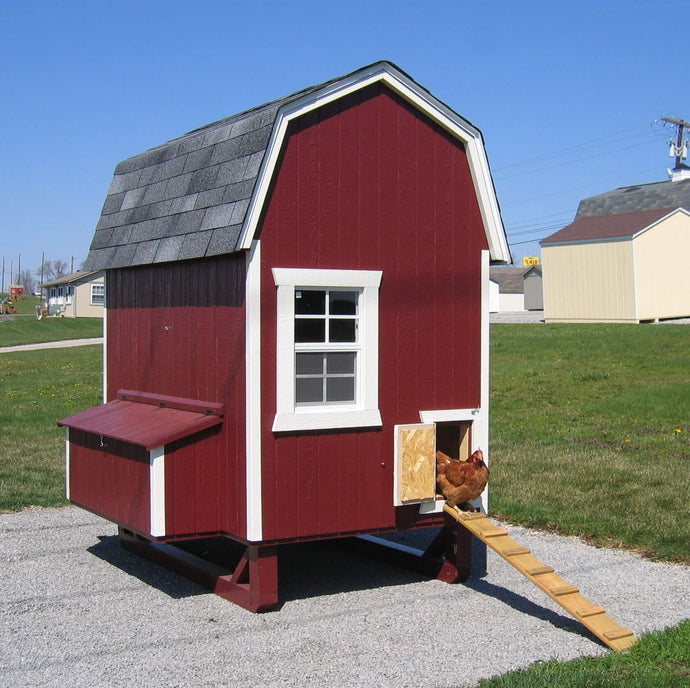 The Best Chicken Coops for 4 Chickens