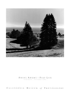Ansel Adams - Pinetrees