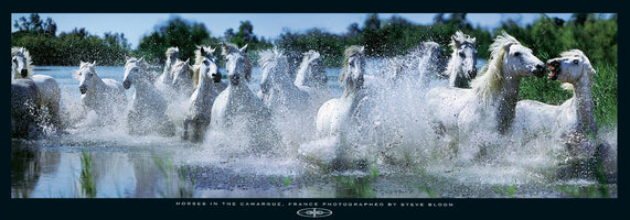 Steve Bloom - Horses in the Camargue