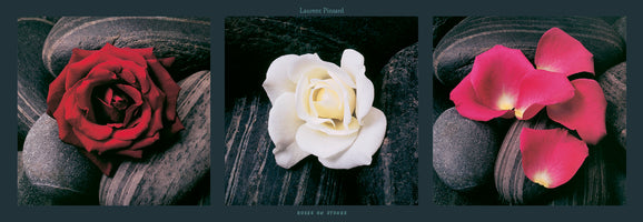 Laurent Pinsard - Roses on stones