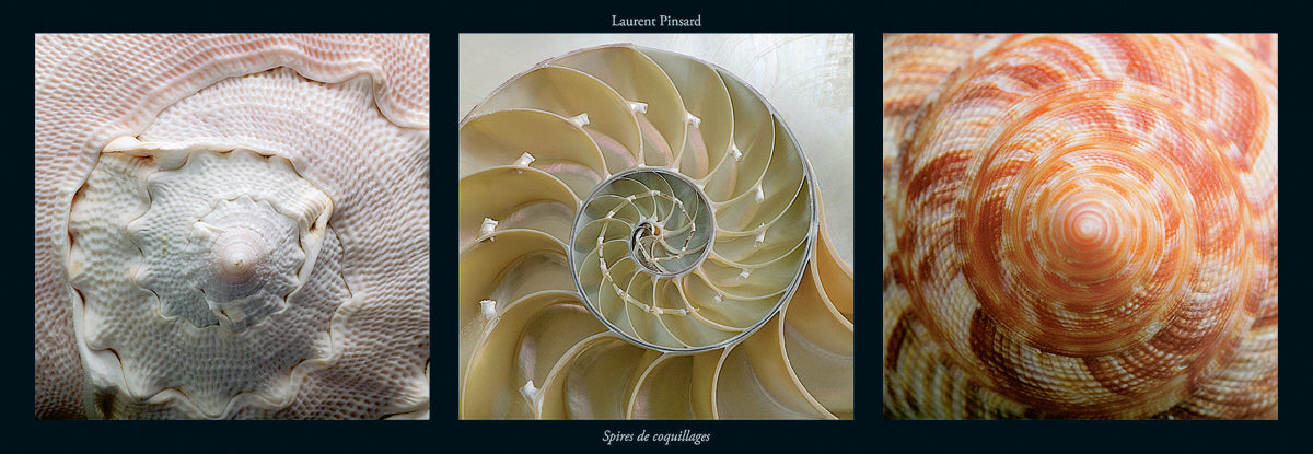 Laurent Pinsard - Spires de Coquillages