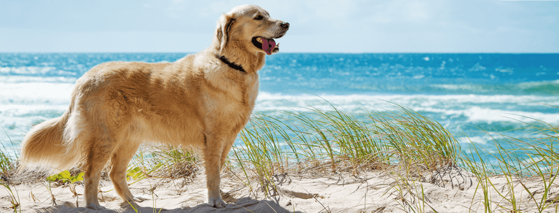 DIY Natural Pet Spray Recipe & Guide