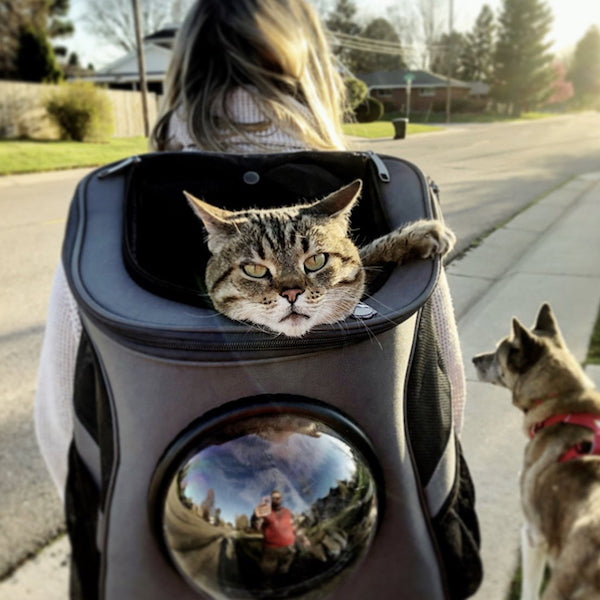 Cat Carrier Bubble Backpack, Pet Backpack for Cats and Dogs