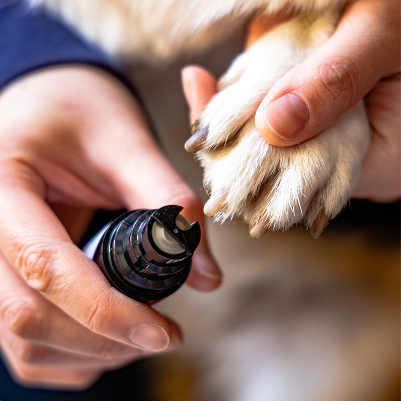 Nail grinder for dog cat