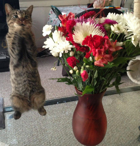 cat_flowers_florists_gifts