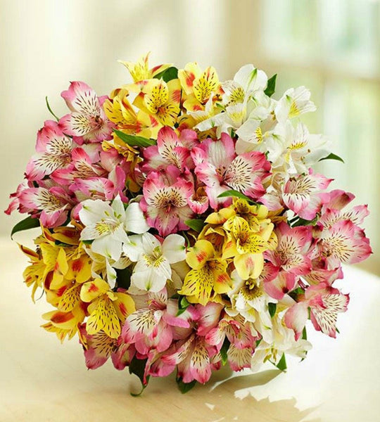 50 Blooms Bouquet Only