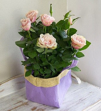 Lovely Rose Gift Bag