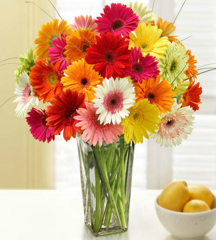 Colorful Gerbera Daisies, 12-24 Stems