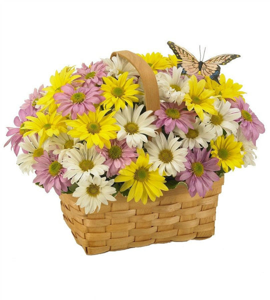Daisy Delivery Basket.