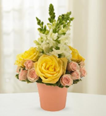 Yellow and Pink Tranquility Roses