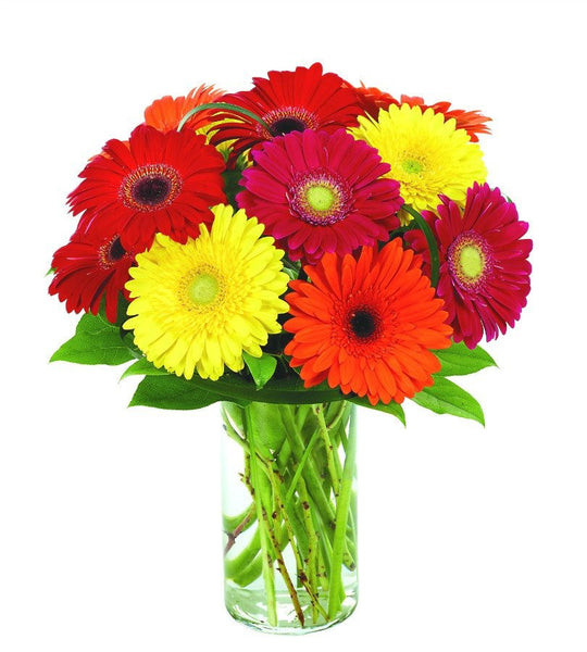Multi-Color Gerbera Display.