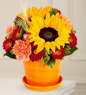 Sunflowers in Orange Display