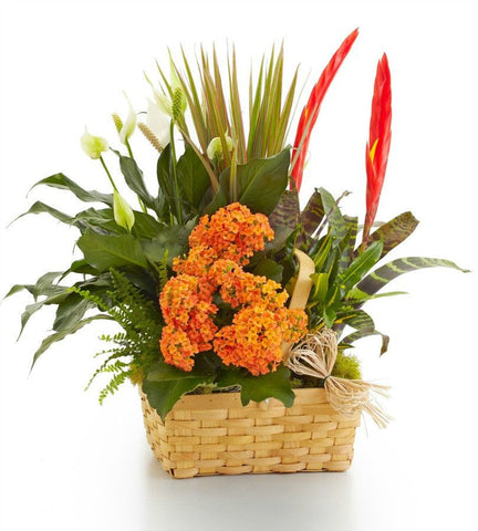 Exotic Garden Basket