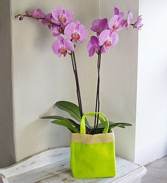 Pink Orchid Gift