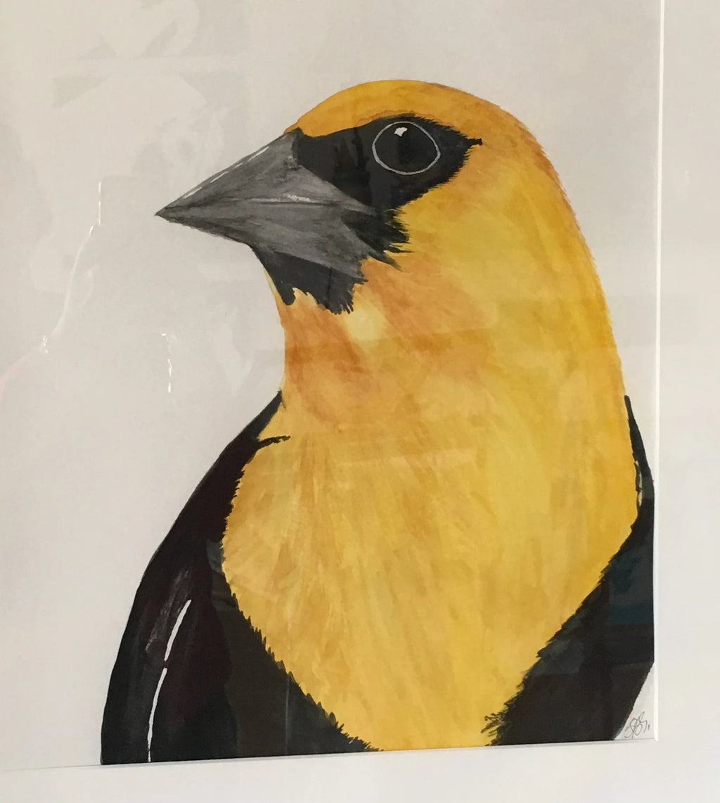 Yellow-headed Blackbird, 23x27""