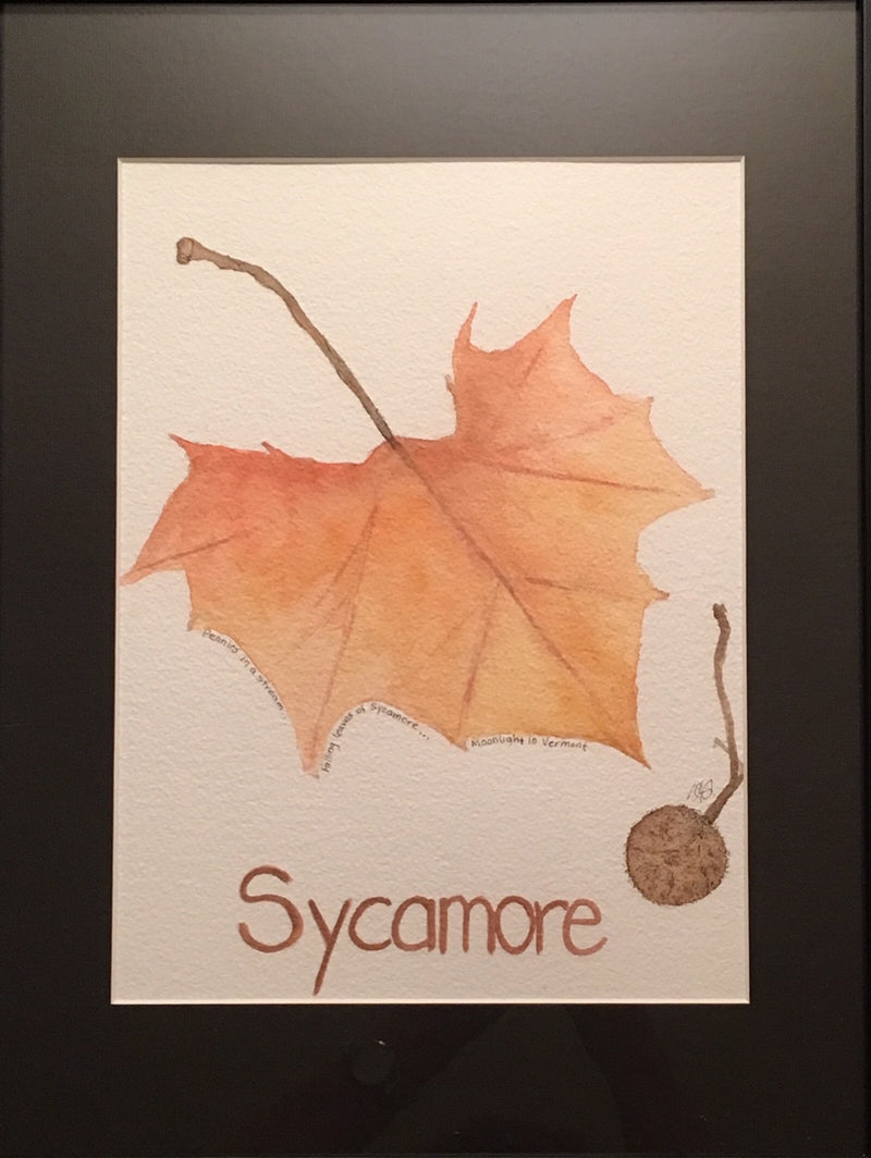 "Sycamore -- A Word Every Child Should Know 11x14"" original watercolor by Susan Snyder"