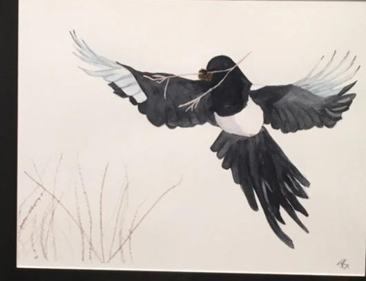 Black-billed Magpie, 19x23""