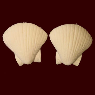 sea shell nipple covers