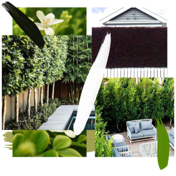 How To Guide - Plant My Hedge Using One Type Of Plant