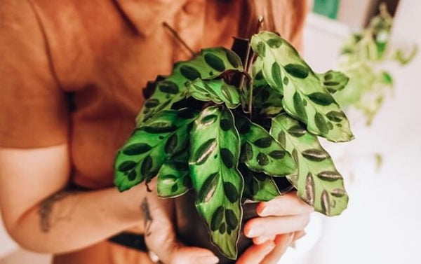 How to prepare your houseplants for the winter ahead!