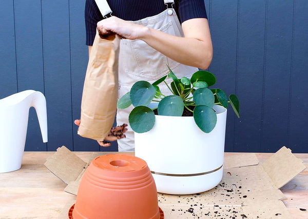How to re-pot your houseplant into a larger pot