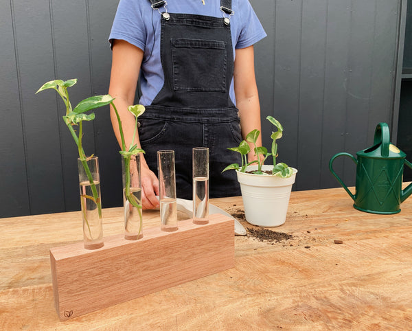 Putting the 'pro' in propagation: Plant cuttings that grow in water