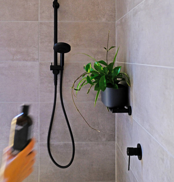 Shower In Style – 8 Best Plants For The Bathroom In 2020