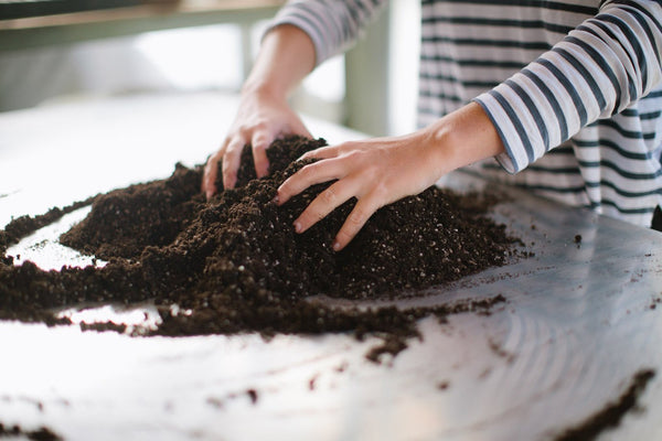 Potting Mix: What Is It?
