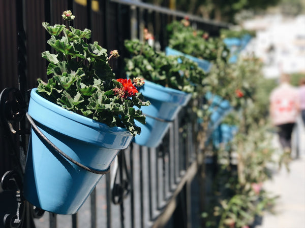 Container Gardening - Gardening for nomads