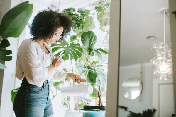 Easy Care Indoor Plants for 2019 -All The Plant Killers Please Line Up