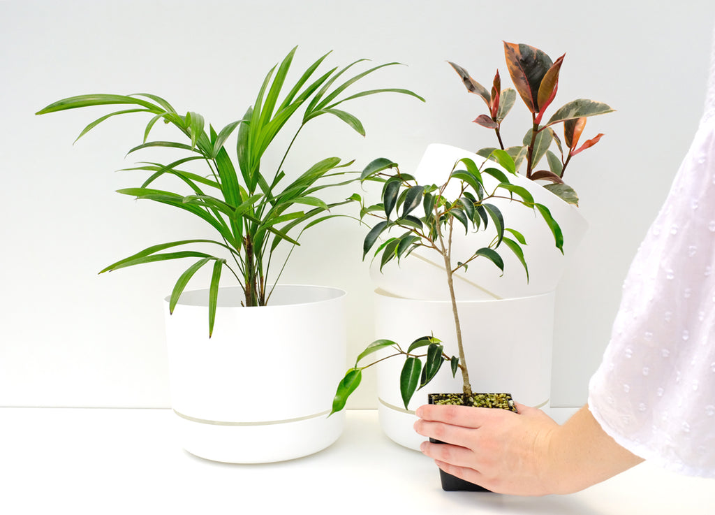 The best way to buy houseplants and pots