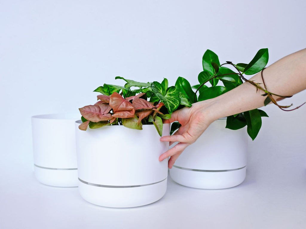 Modern Pots and Plants For Your Home