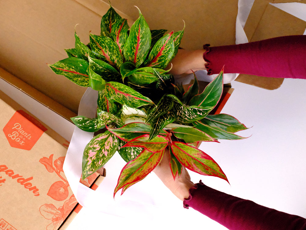Plants delivered in the mail