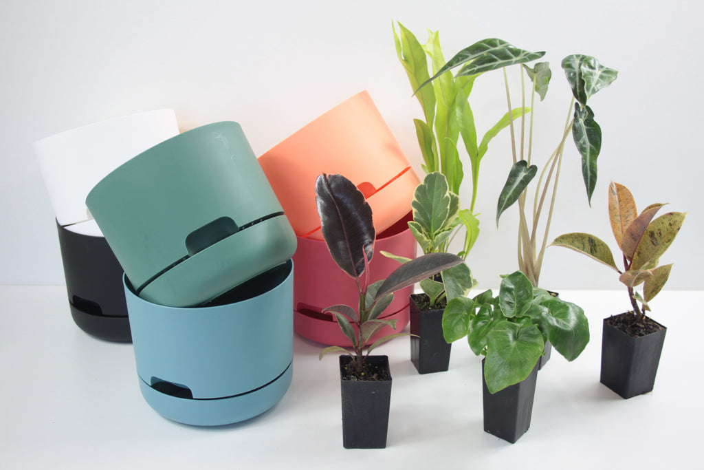 Indoor Plants and Pots for your Office Space
