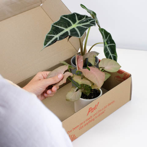 Buy Gifts Online | Free Shipping Australia Wide | Indoor Plants