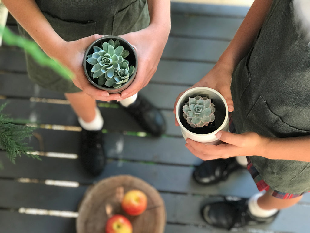 succulents online Australia | Gifts