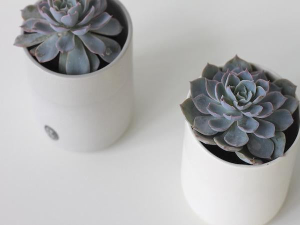 Succulents | Gifts | Plants in a Box | Free Shipping Australia