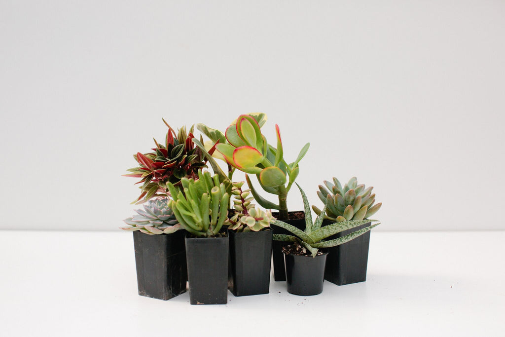Coastal Gardens | Plants in a Box
