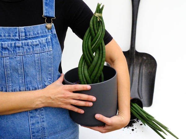 overalls plant Sansevieria recyclable pot