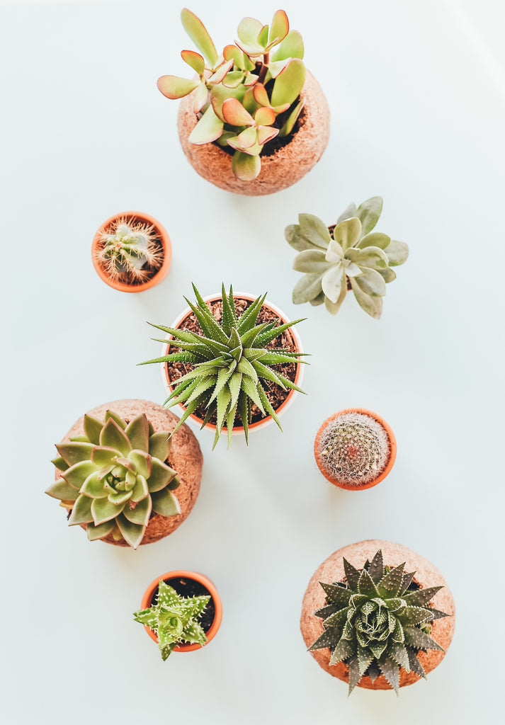 Succulents | Plants Online | Free Shipping  | Plants in a Box