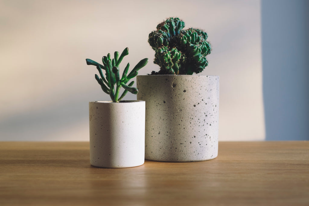 Plants in a Box | Succulents | Desk Plants | Office Plants | Tough Succulents