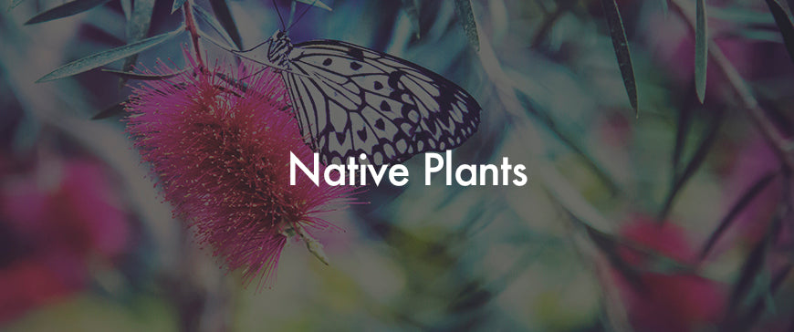 Buy Australian Native Plants Online | Free Shipping From $3.90